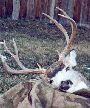 Mule Deer Harvest - 2001 and Prior - 006